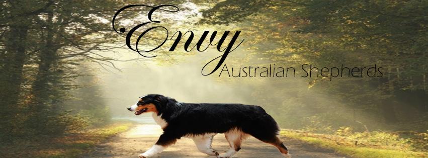 Australian Shepherds AKC/ASCA